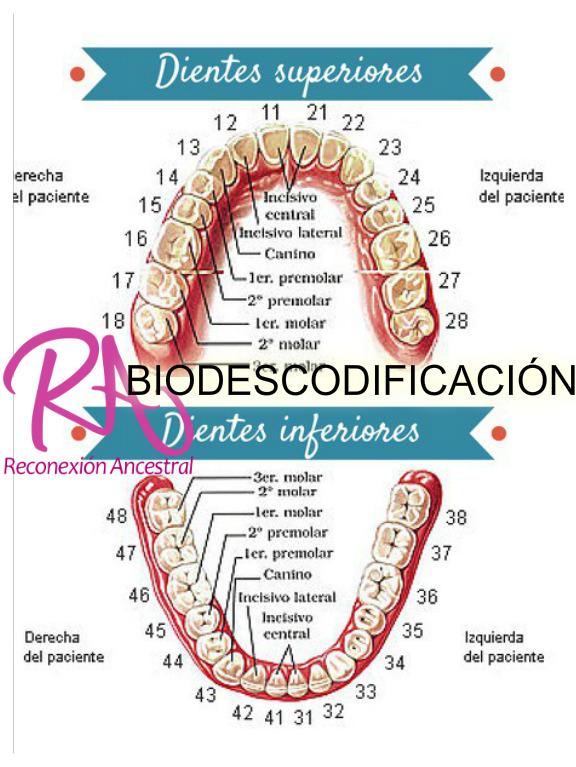 Biodescodificacion De Los Síntomas En Los Dientes